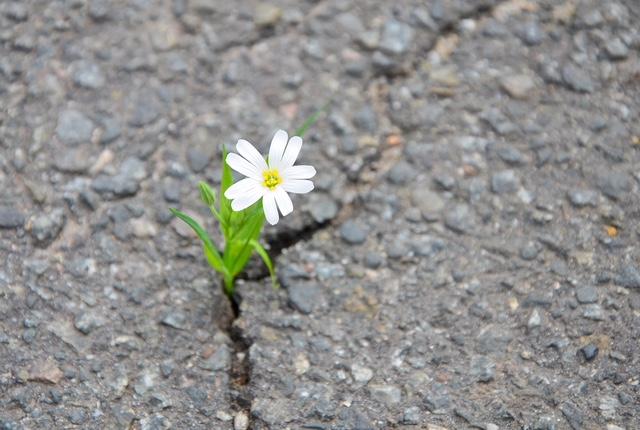 flowerfromcrack